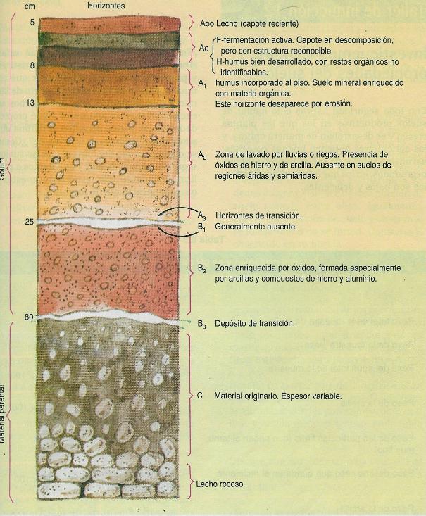 8 ciencias 3 lecci n estructura vertical del suelo 3 for El suelo y sus capas