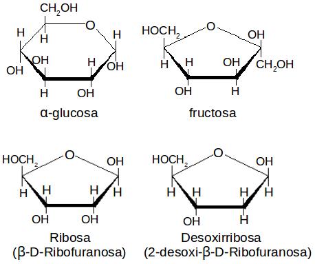 11 Quimica 2 Lección Clasificación De Los Carbohidratos